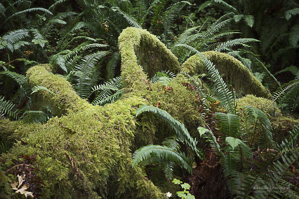 Moss covered in  Ho Rainforest