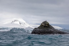 Chinstrap Penguin near Elephant Island