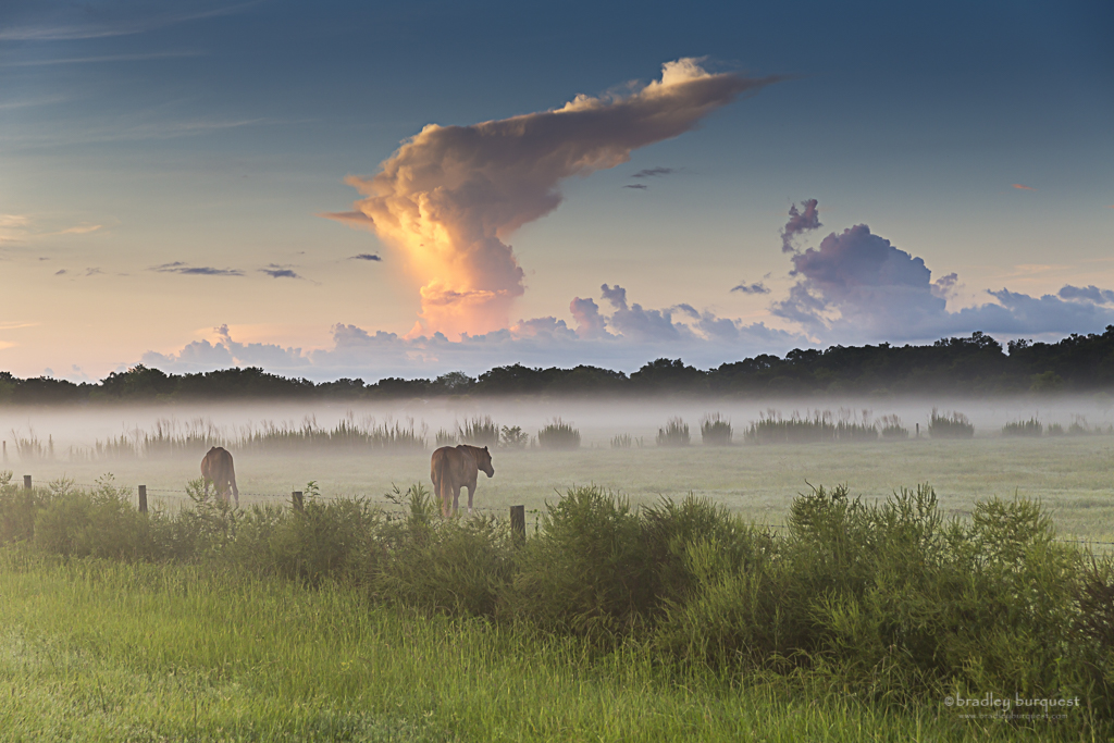 Horses and Thunder Head