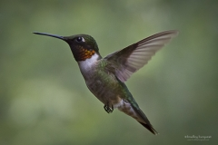 Hummers-1
